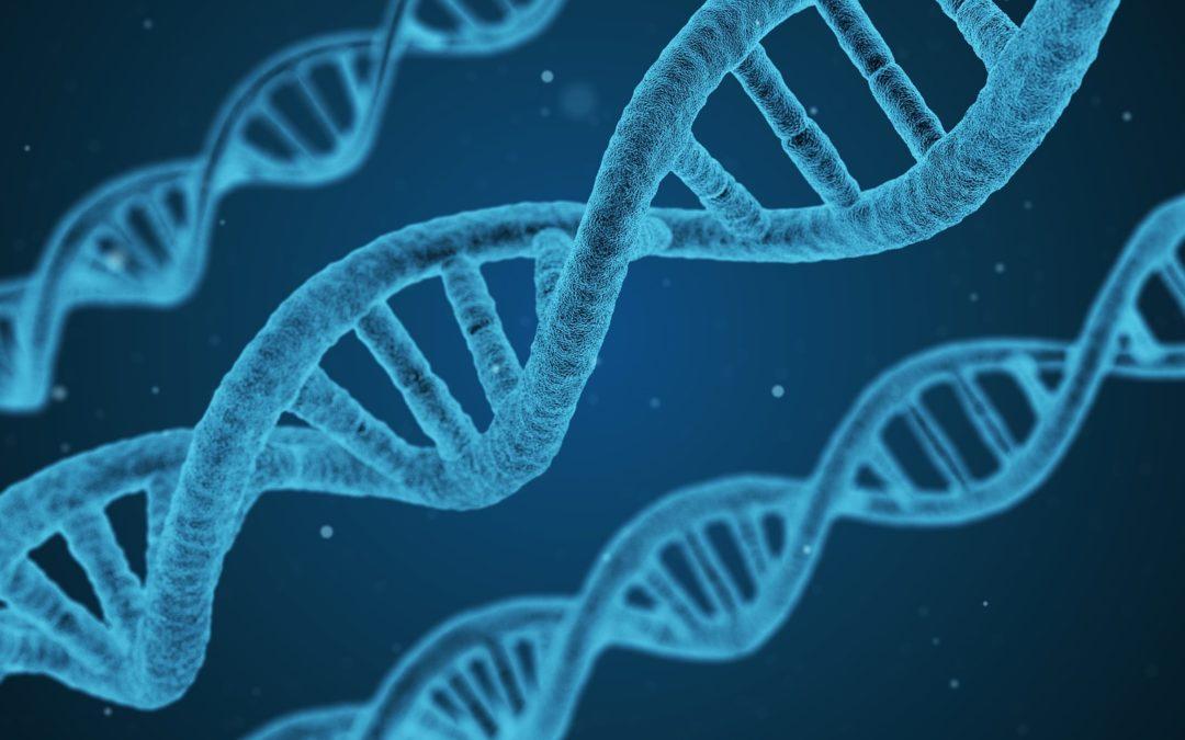 How does MTHFR affect fertility?